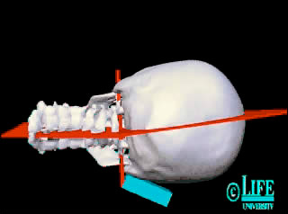 upper cervical adjustment animation
